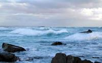 South Africa's West Coast Fossil Park, near to Langebaan in the Western Cape, has a wide range of marine life supported by the nutrient-rich Benguela current (Photo: West Coast Fossil Park)