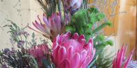 The Mossel Bay Flower Show is an annual delight to gardening enthusiasts and visitors alike.