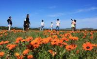 Tourists stop to admire the remarkable spring display of wild flowers at the West Coast National Park (Photo: South African National Parks)
