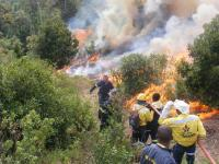 Eden District Municipality's fire brigade and Working for Fire members conducting a controlled fire.The public has been asked to be patient and endure the smoke when controlled fires take place, as this will be good for the long-term.