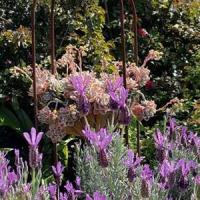 Lesley Jurgens's garden can be viewed on Saturday 8 November along with others.
