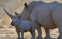 The Kruger National Park has recorded the highest number of rhino killed in 2014. (Image: Kruger National Park )