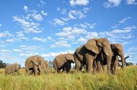 The resident herd at Knysna Elephant Park currently comprises nine elephants. The public have been invited to celebrate the park's twentieth anniversary on Sunday, October 26.