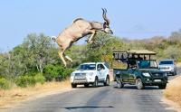 Professional photographer Arno Pietersen photographed a leaping kudu while he was on safari in Kruger on 19 July 2015. (Image: ARL Photography)