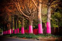 Trees wrapped by Pink Trees for Pauline Middelburg, Mpumalanga (Photographer: Mariette  du Buson)