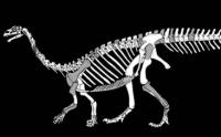 A drawing of the Sefapanosaurus. (Wits University)