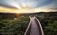 Kirstenbosch is home to the Centenary Tree Canopy Walkway, also known as the Boomslang. (Image: Adam Harrower, Sanbi
