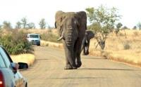 Animals have right of way on the roads of the Kruger National Park (Photo: Mary Alexander, MediaClubSouthAfrica.com)