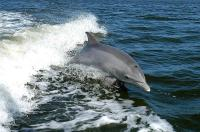 Dolphin research project