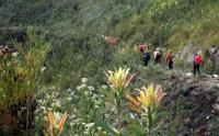 Hiking through South Africa's uniquely beautiful fynbos. (Photo: Galeo Saintz, Eden to Addo Corridor Initiative)