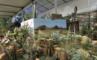 The 1999 Namaqualand and 1997 Eastern Cape section of the Sanbi-Kirstenbosch exhibit at the Chelsea Flower Show 2015. (Image: Sanbi, Kay Montgomery)