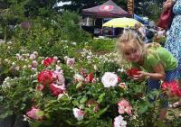 Seven-year-old Andrea Martin still has time to stop and smell the roses! Seen at the recent Leisure Isle Festival that attracted visitors from all over the Garden Route over the weekend of November 7 and 8 (Photo: Ingrid Lehmensich-Botha).
