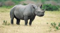 749 rhinos killed in 2015
