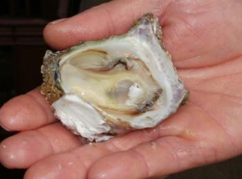 Munros Cape Oysters: Munros Cape Oysters
