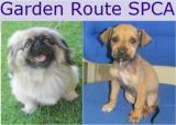 Garden Route SPCA: Garden Route SPCA