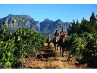 Exploring the winelands on horseback