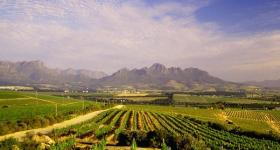 Alternative Winelands Tour