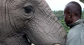 Knysna Elephant Park is located between Knysna and Plettenberg Bay