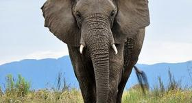Extraordinary Elephant Encounters