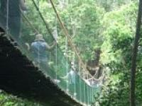 Monkeyland Primate Sanctuary Plettenberg Bay