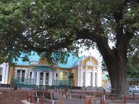 The Old Slave Tree in Yorkstreet, George, Western Cape