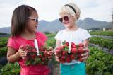 Experience the picking of your own strawberries
