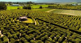 The maze at Red Berry Farm