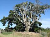 The Tree of Meeting in Pacaltsdorp