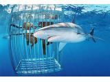 shark cage diving, mosselbay,south africa