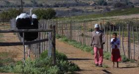 Calitzdorp Ostrich farm Garden Route Western Cape South Africa