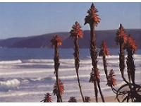 View of Wilderness Beach George Garden Route South Africa