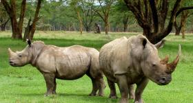 Rhino Great Brak River Garden Route Western Cape South Africa