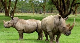 Rhino Great Brak River Garden Route Western Cape South Africa