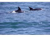 Hartenbos Whale watching Garden Route Western Cape South Africa