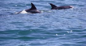 Hartenbos dolphin watching Garden Route Western Cape South Africa