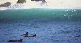 Dolphins in Plettenberg Bay