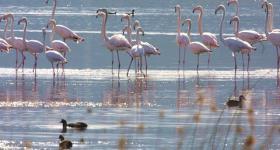Flamingos at Swartvlei Sedgefield Garden Route South Africa