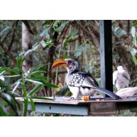 Birds of Eden free flight sanctuary Plettenberg Bay - Garden Route South Africa