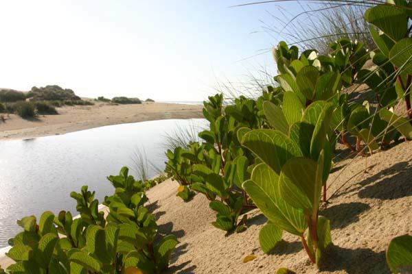 Nautilus bay coastal nature reserve mossel bay real estate for Nautilus garden designs