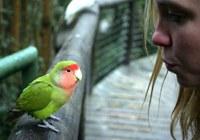 Birds Of Eden free flight bird sanctuary