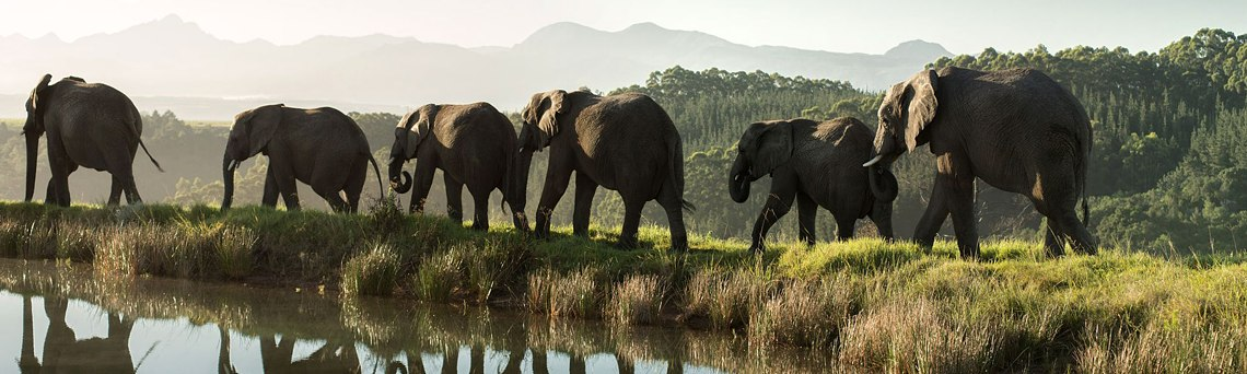 Knysna Elephant Park - Extraordinary Elephant Encounters