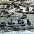 Seal Island is a popular tourist attraction in Mossel Bay
